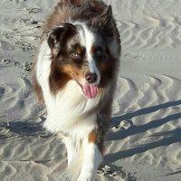 Neelix im Sand