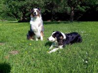 Balou und Baily in unserer Obstwiese