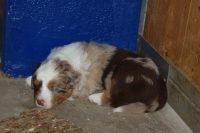 Neelix 4 Wochen alt