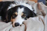 baily-und-ihre-welpen-auf brockdog-DSC_0457