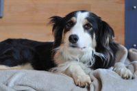 baily-und-ihre-welpen-auf brockdog-DSC_0461
