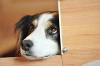 baily-und-ihre-welpen-auf brockdog-DSC_0486