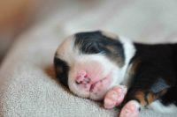 baily-und-ihre-welpen-auf brockdog-DSC_0521