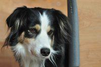 baily-und-ihre-welpen-auf brockdog-DSC_0550