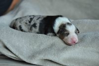 baily-und-ihre-welpen-auf brockdog-DSC_0563