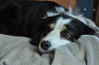 baily-und-ihre-welpen-auf brockdog-DSC_0567