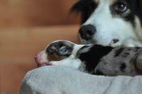baily-und-ihre-welpen-auf brockdog-DSC_0571