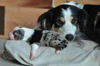 baily-und-ihre-welpen-auf brockdog-DSC_0594