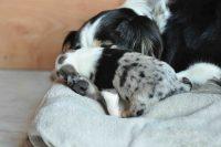 baily-und-ihre-welpen-auf brockdog-DSC_0606