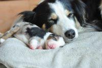 baily-und-ihre-welpen-auf brockdog-DSC_0616