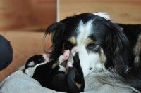 baily-und-ihre-welpen-auf brockdog-DSC_0631