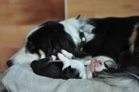 baily-und-ihre-welpen-auf brockdog-DSC_0639