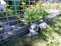 Kleine Blumen - Hund noch kleiner