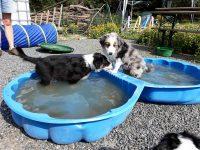 Schwimmbad mit Doppelbecken