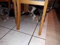 Kleines Kämpfchen unterm Tisch