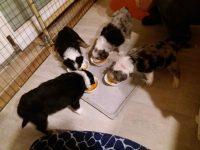 Fütterung der Raubtiere