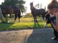 Campari und die Pferde